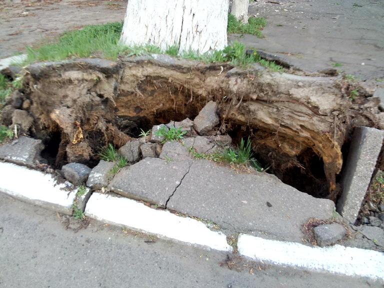 Возле Приватбанка упало дерево!