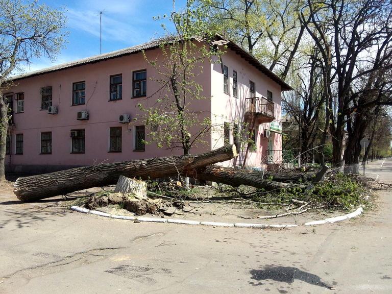 Упавшее после вчерашнего урагана дерево уже спилили