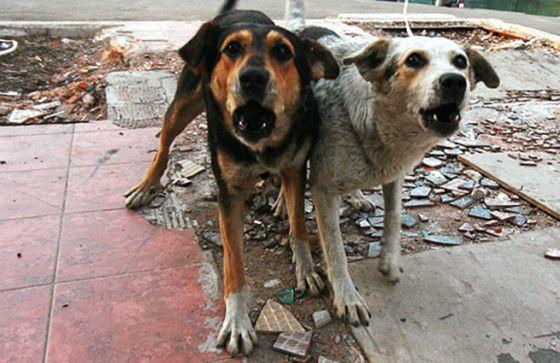 Город заплатит почти 40 тысяч гривен за отлов 50 собак!