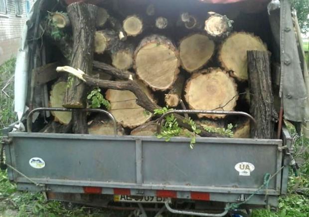 Под предлогом «аварийного омоложения» в Каменском уничтожают деревья