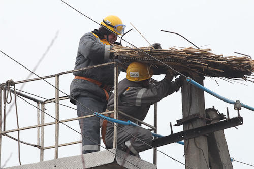 ДТЭК Днепрооблэнерго обустраивает безопасные гнезда для аистов