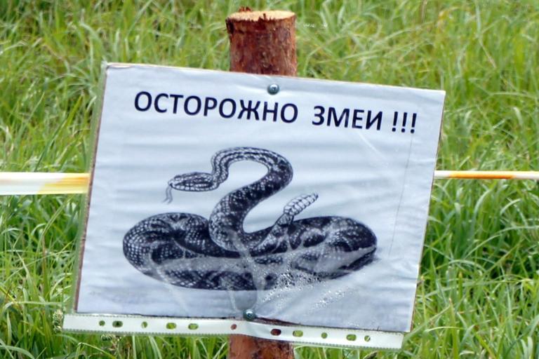Змеи в городе. Кто должен их отлавливать?
