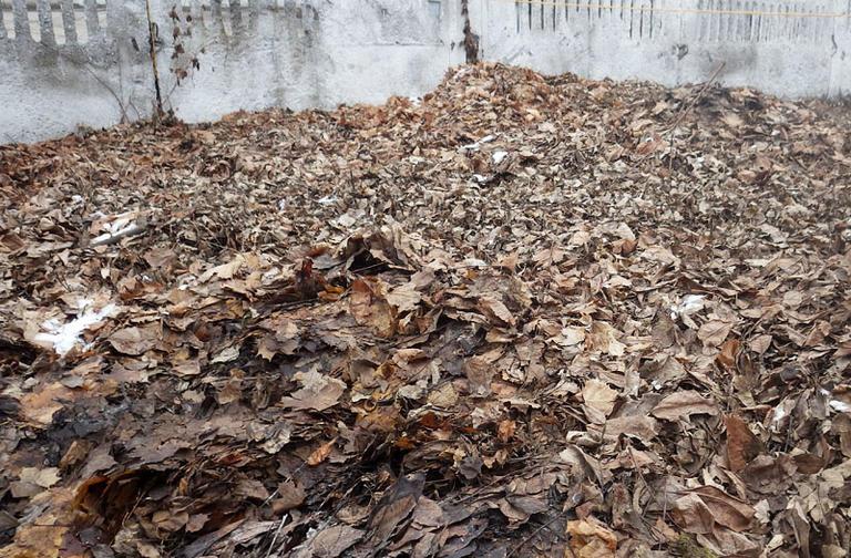 Уборка листьев важнее здоровья пациентов?