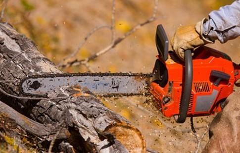 На обрезку и удаление деревьев потратят почти полмиллиона гривен