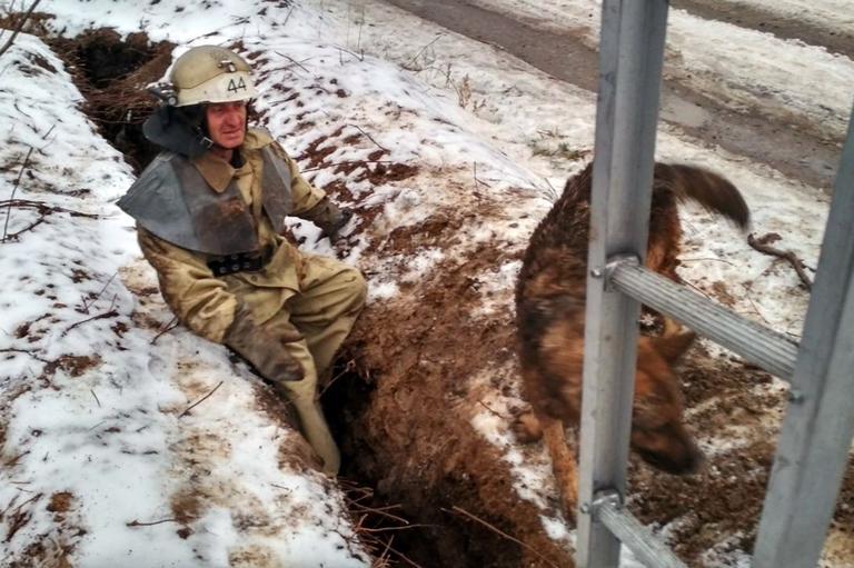 В Покрові рятувальники визволили собаку з пастки