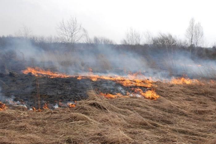 Міністр екології пропонує суттєво підвищити штрафи за випалювання сухостоїв