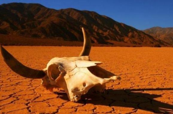 ООН: Стан природи є найгіршим в історії людства