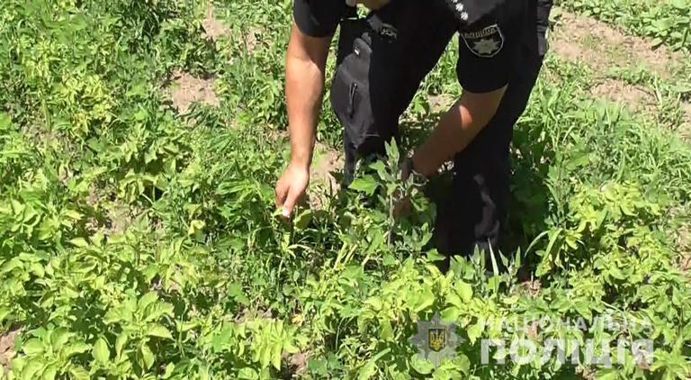 У мешканця Покрова поліція виявила плантацію маку та конопель