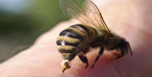 Начался сезон укусов шмелей, ос и пчел