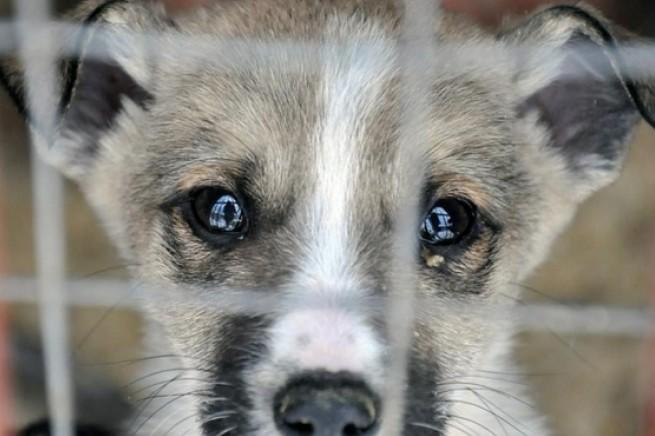 На Луганщині засудили чоловіка за жорстоке поводження з твариною