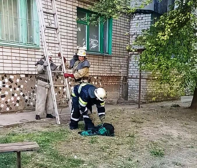 В Покрове спасатели освободили собаку