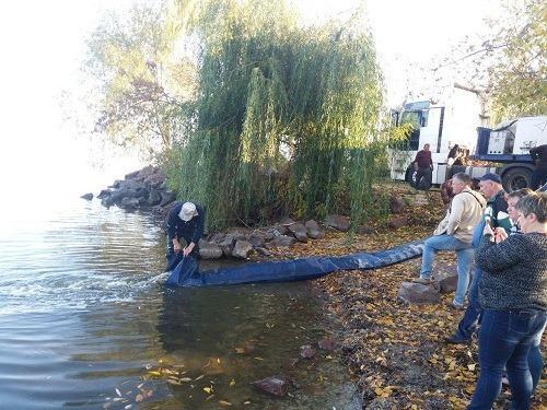 У Каховське водосховище випустили понад 5 тонн молоді риби