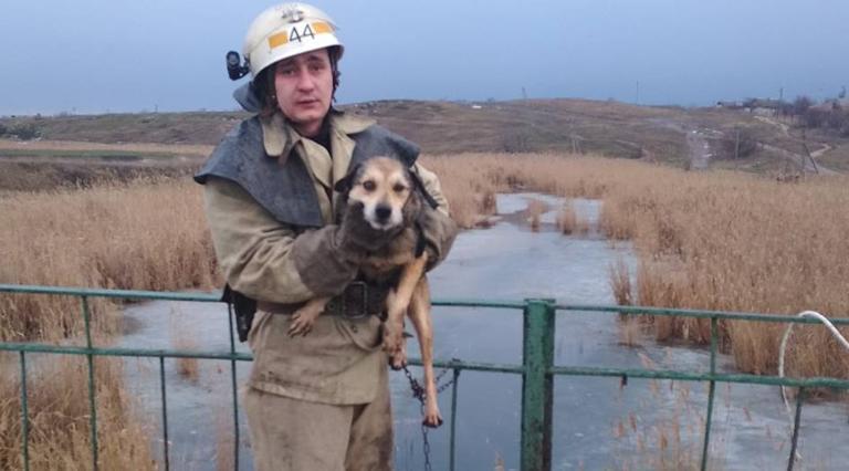 В Шолохово спасатели вытащили собаку из речки