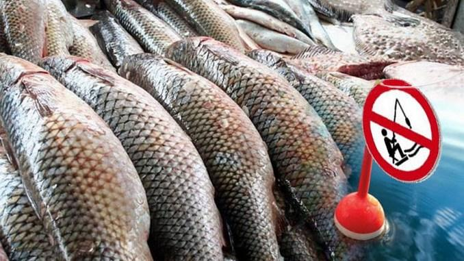 Зміни клімату на Дніпропетровщині вплинули на строк початку заборони вилову риби