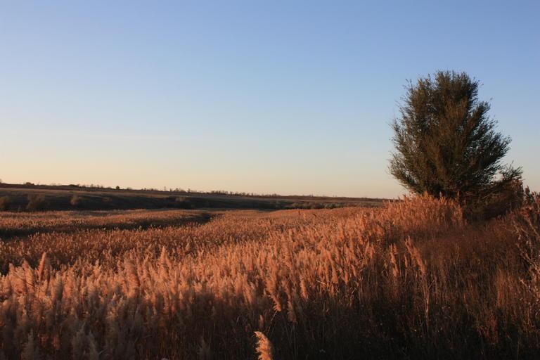 На берегах Базавлука и Соленой запрещено отдыхать, рыбачить и охотиться? Что известно о заказнике «Базавлуцкий»