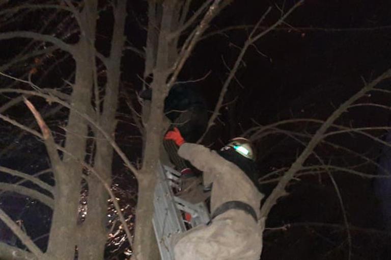 В Покрове пришлось спасать парня, пытавшегося снять кошку с дерева